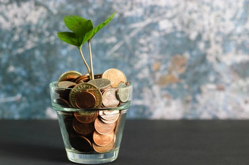 15 Herbs and Plants to Attract Money and Grow Prosperity