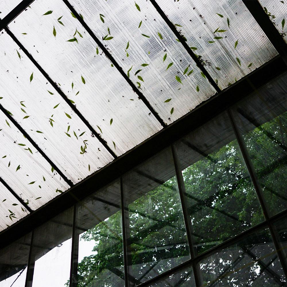 Heavy Rain in Large Greenhouse