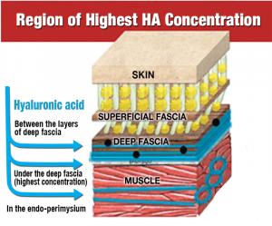 Fascial Tissue