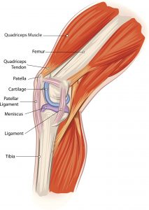 Medical Knee Pain