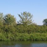 Summer Pond