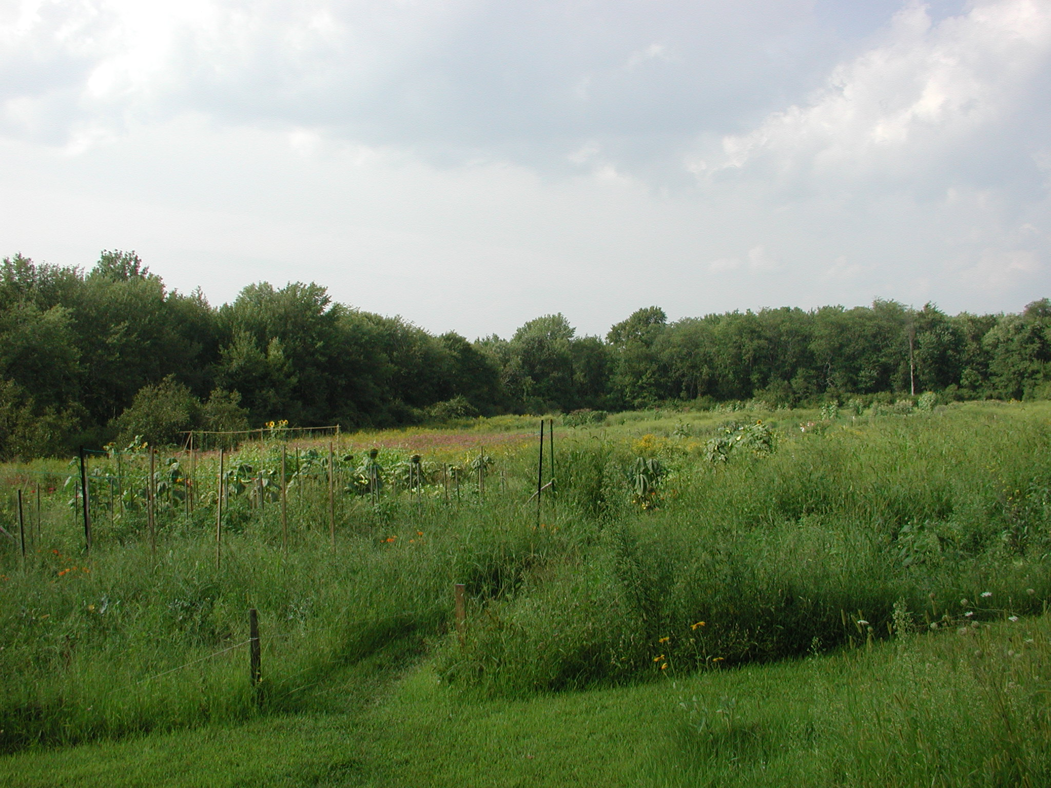 Sudbury Community Gardens