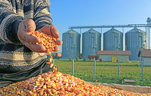 grain in hands - silos in background
