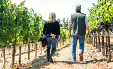 Webinar: Cannabis & the Wine Industry in California