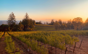 Case Study:  One Winery's DTC Growth in a Decade with WineDirect