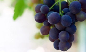 Getting Green Marketing Right for Your Winery
