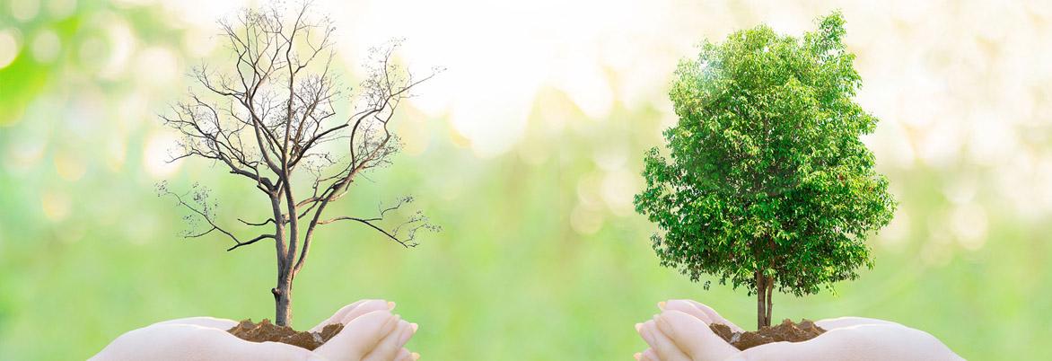 Thumbnail do curso de Gestão Ambiental