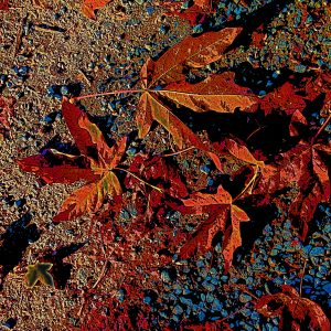 wiltshire-colourful leave ground