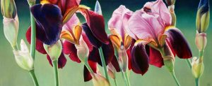 "Iris Intense  24 x 57"""