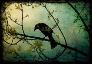 vermeulen-The-Watcher