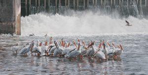 Pelican_Paradise4