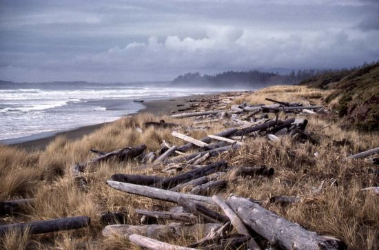 On Wichaninnish Beach on the west coast of Vancouver Island, BC, driftlogs are tossed up by the winter storms, then bleached by the summer sun.