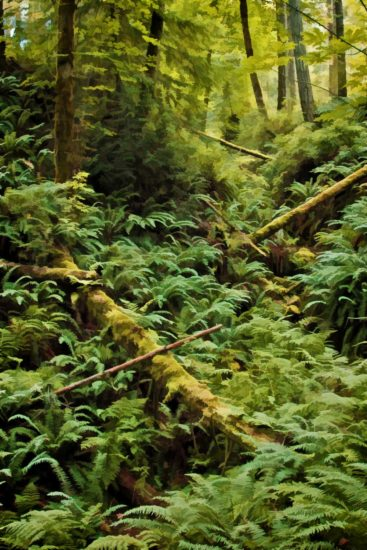 Late spring in the forest hollow brings lush ferns as far as the eye can see.
