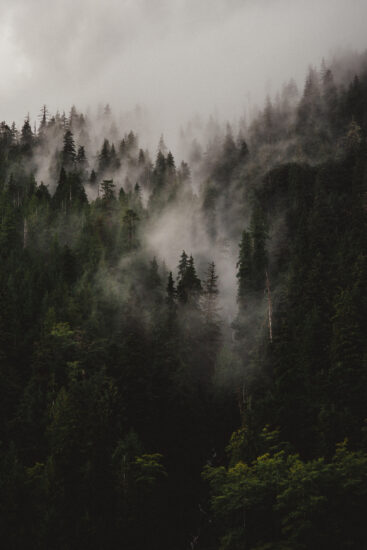 meredithrose-forestfog