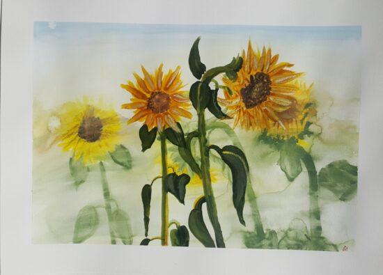 Sarfi-Sunflower1