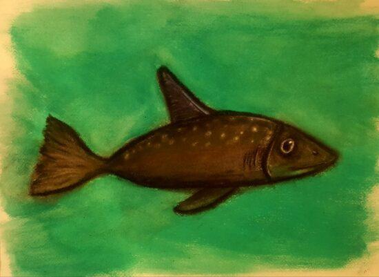 Sarfi-Chalkfish