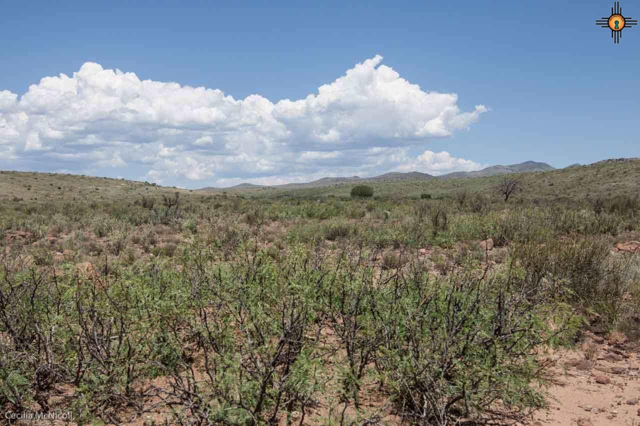 Grasslands at start of monsoon season