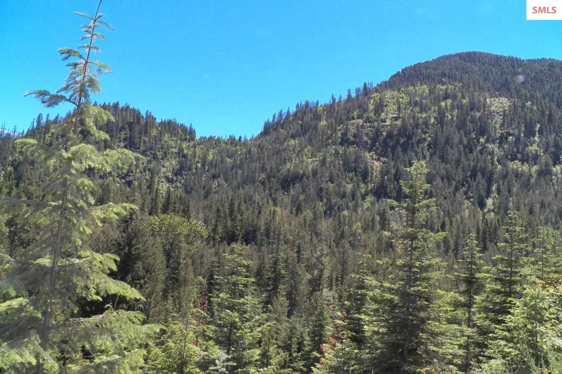 Logging Roads Access Nearly All Of The Property