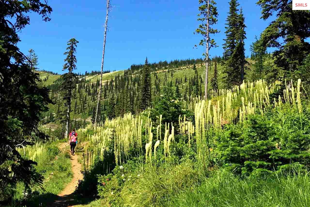 Hike Amidst the Beargrass
