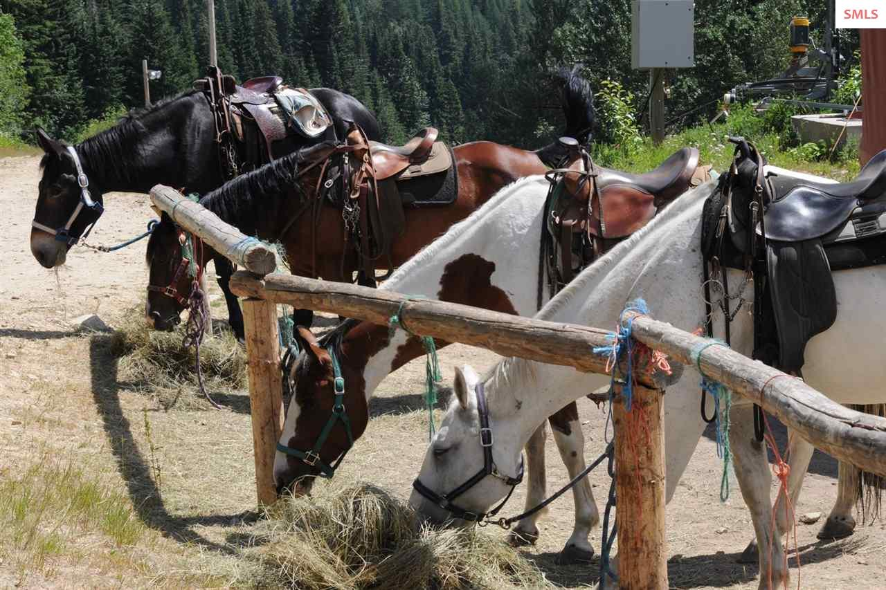 Trail riding offered all summer