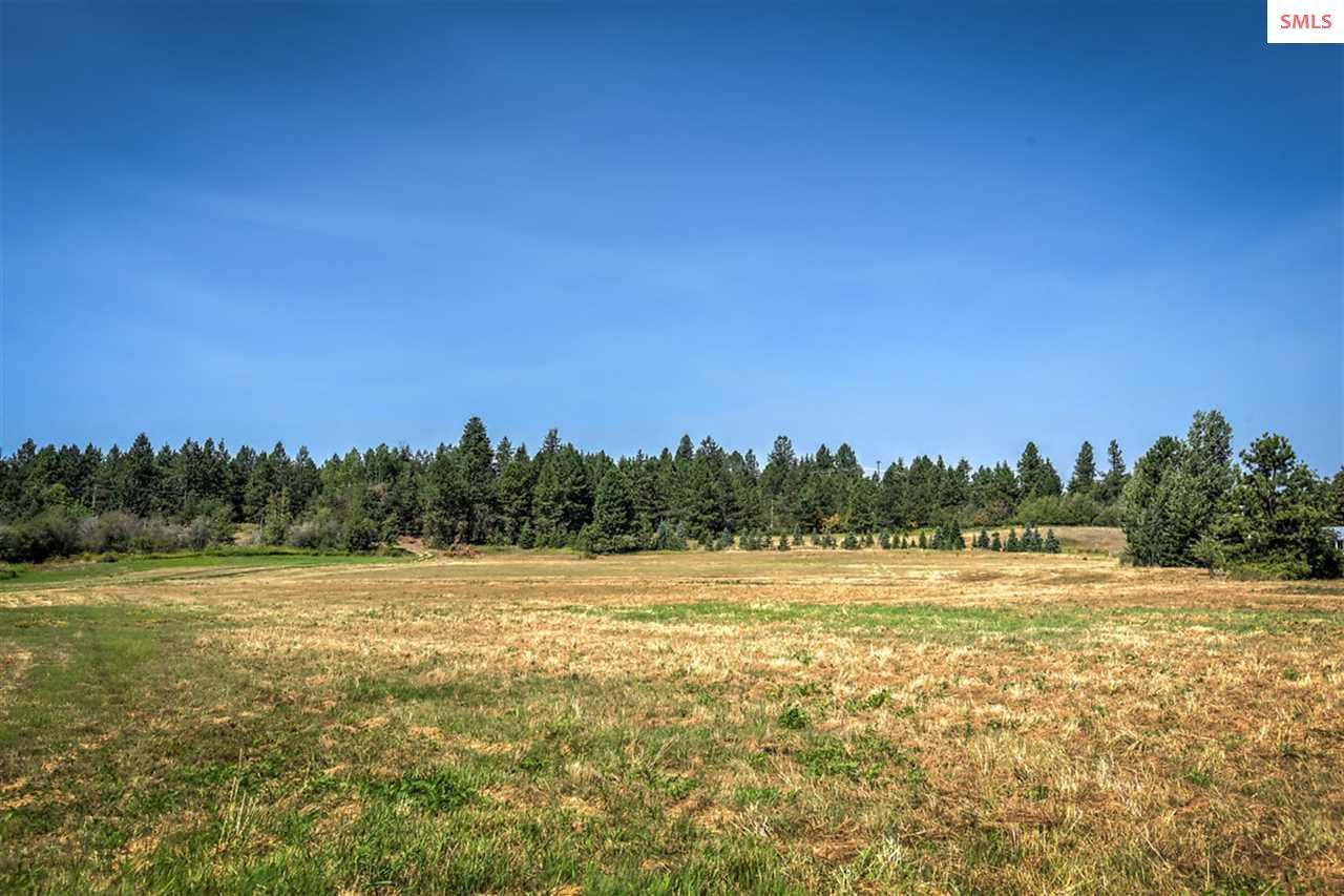 Ample pasture