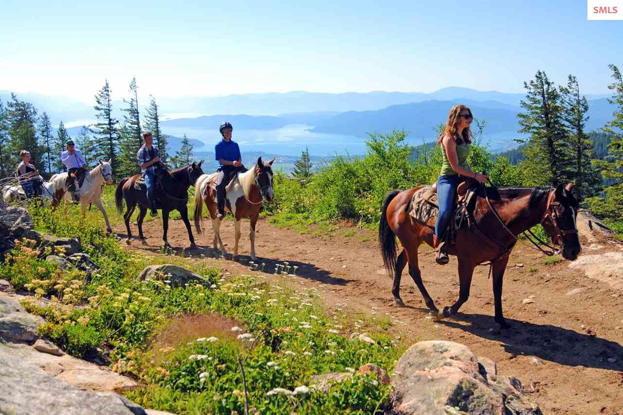 Fresh mountain air, friendly horses