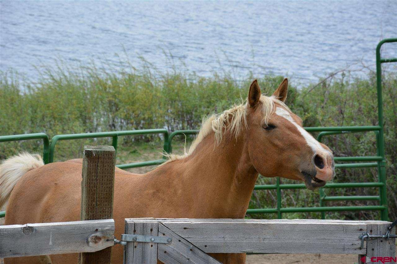 What horse in the world would not love living in t