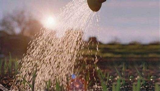 2019年化肥进口关税配额总量 分配原则及相关程序公布