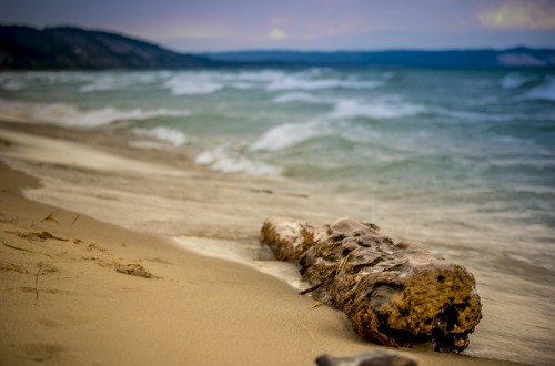 log, driftwood, wood, beach, lake, ocean