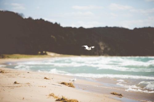 seagull, bird, beach, lake, shore, michigan