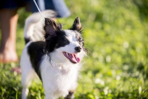 dog, animal, pet, puppy, white, black, leash