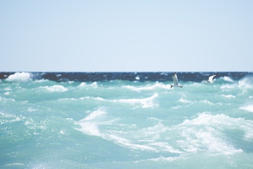 seagulls, birds, waves, ocean, water, summer, sky