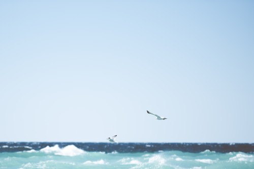 seagulls, birds, waves, ocean, water, summer, sky
