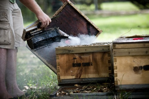 honey, bees, hive, smoker, beekeeper, bugs, insects, bumblebees