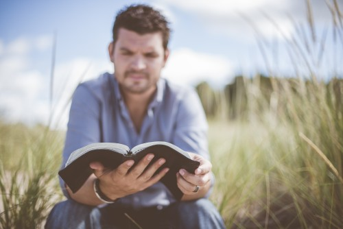man, bible, study, reading, devotions, field, grass