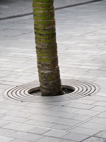 tree planted using stratacell system