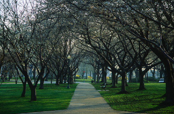 Citygreen - Trees save 850 lives a year in America