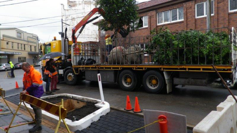 Tree Planting in Marrickville