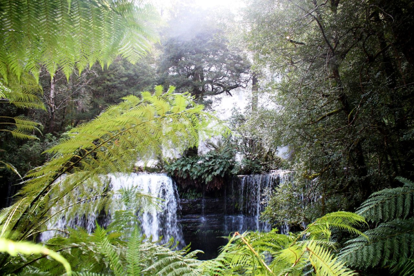 Citygreen - The New Zealand Tree Project Captures Last Forest Frontier