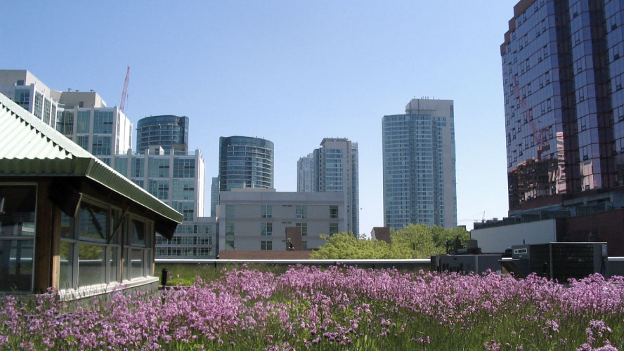 green roofs improve concentration