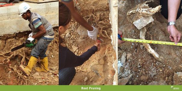 Root-Pruning
