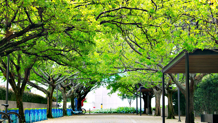 Reforestation Hubs Can Give A Second Life To City Trees And Create Jobs