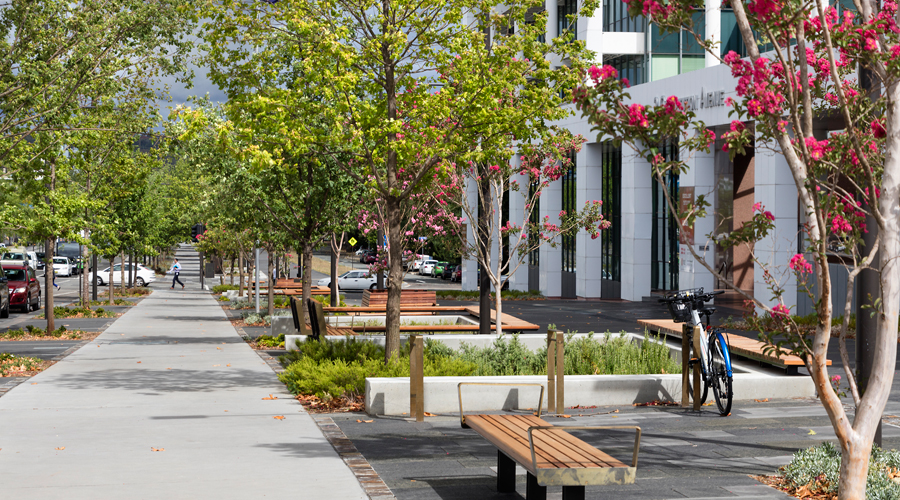 trees along Constitution Avenue Canberra