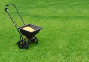 fertilizing
