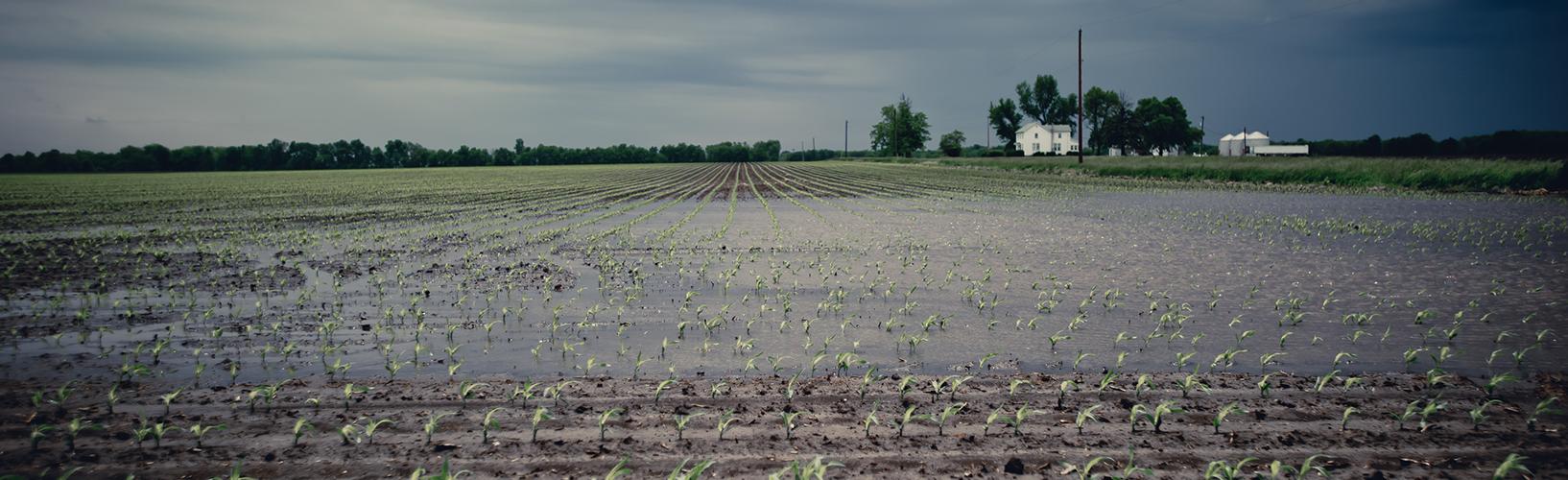 rain-in-field