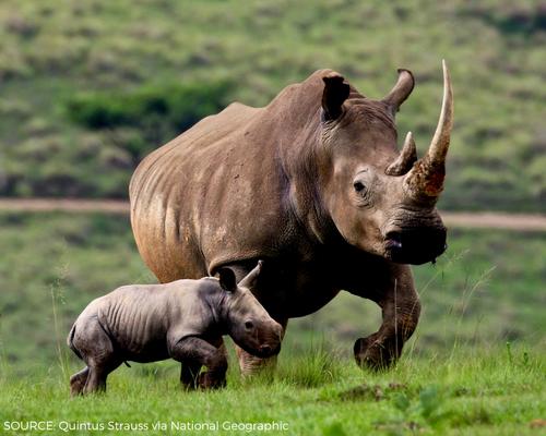 Save the Rhino Day Header Image