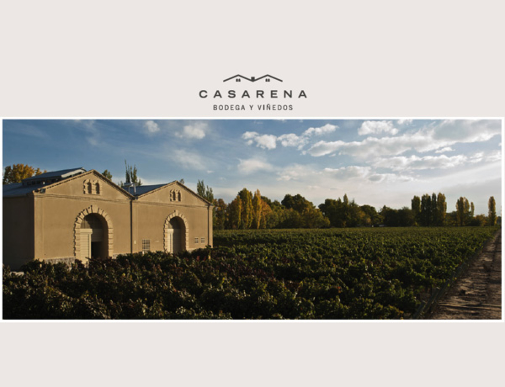 Casarena winery and vinyards