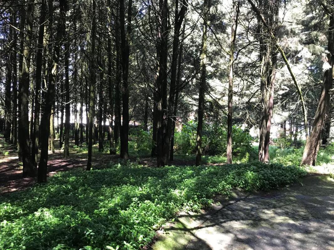 Terreno Habitacional en venta - Gran oportunidad!! Hacienda Jajalpa