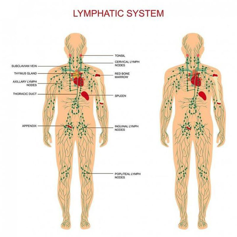 Plant Therapy Lymphatic Drainage