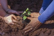 Shorto how to plant a tree in the desert 01